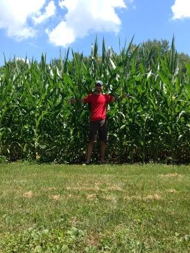 Corn taller than him!
