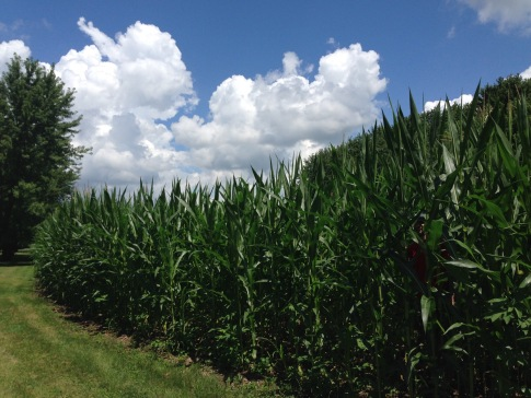 "Play a little ""Where's Tim"": he's hiding in the corn. :)"